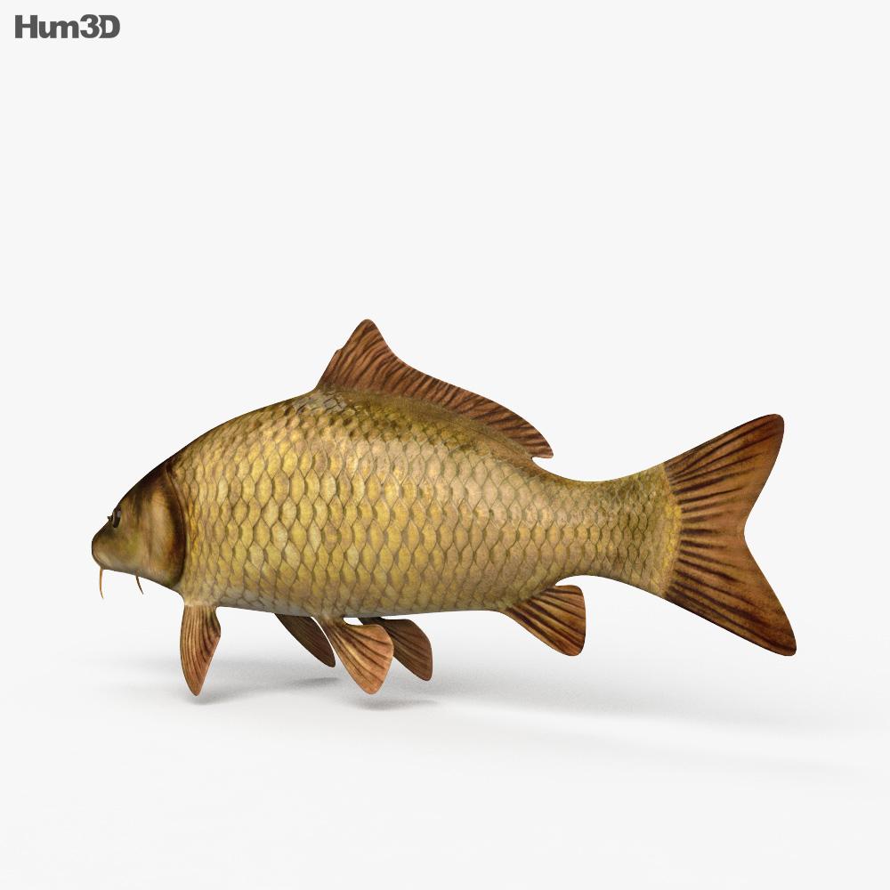 Carp HD 3d model
