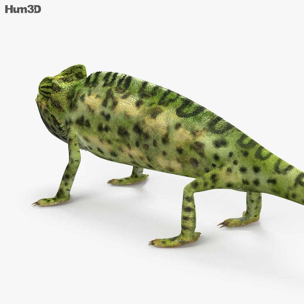 Veiled Chameleon HD 3d model