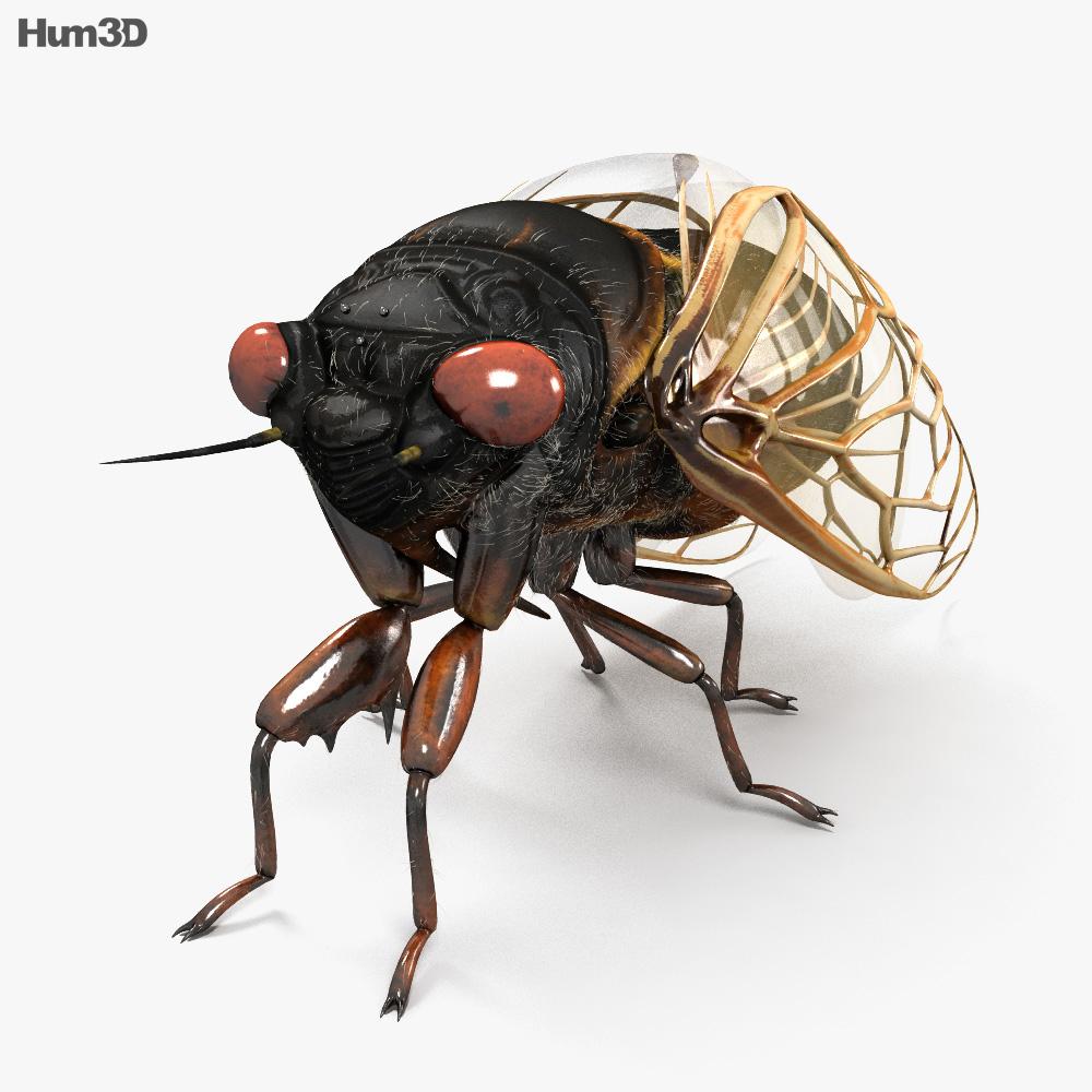 Cicada HD 3d model