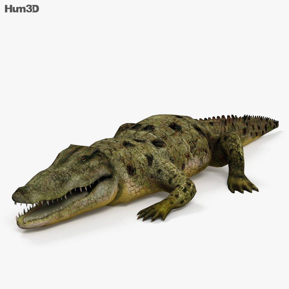 Common Crocodile HD 3d model