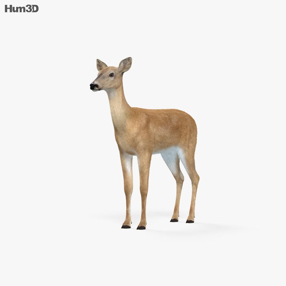Doe HD 3d model