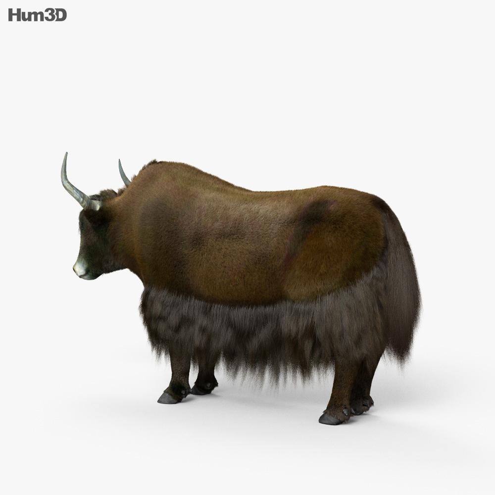 Yak HD 3d model