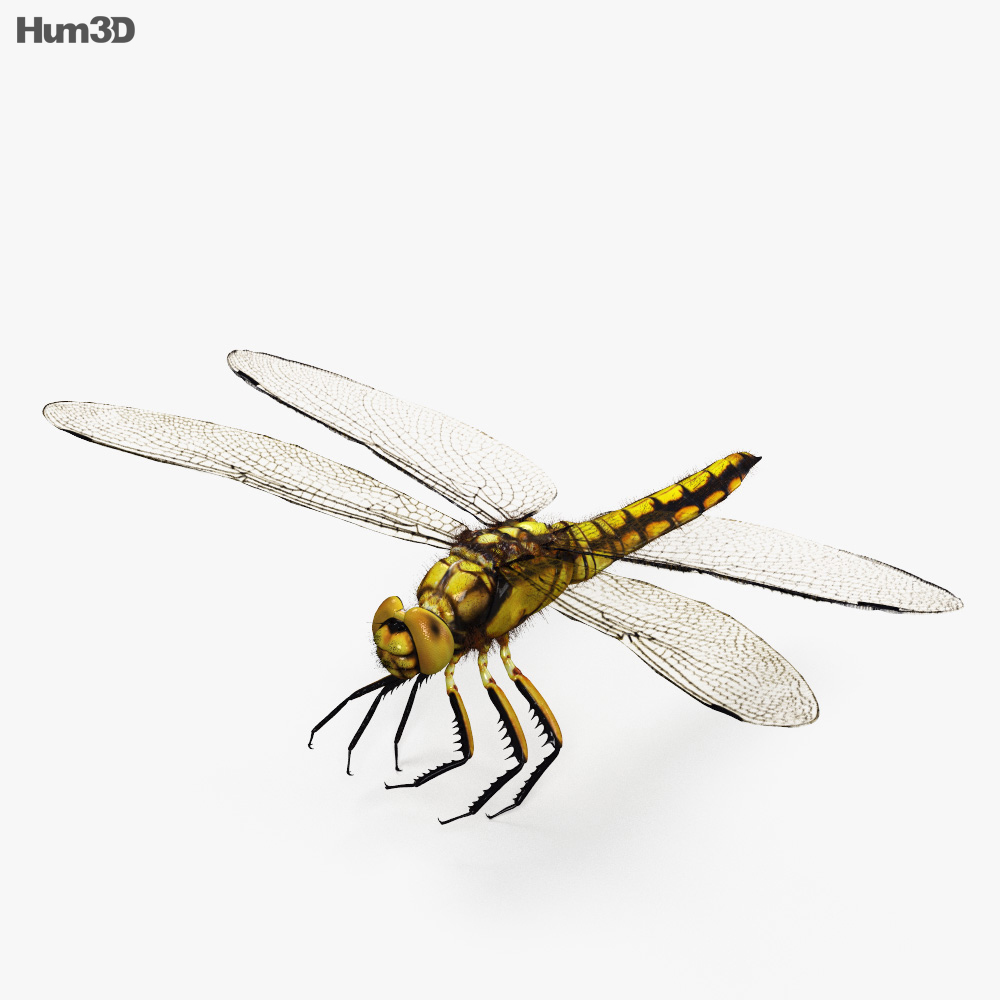 Dragonfly HD 3d model