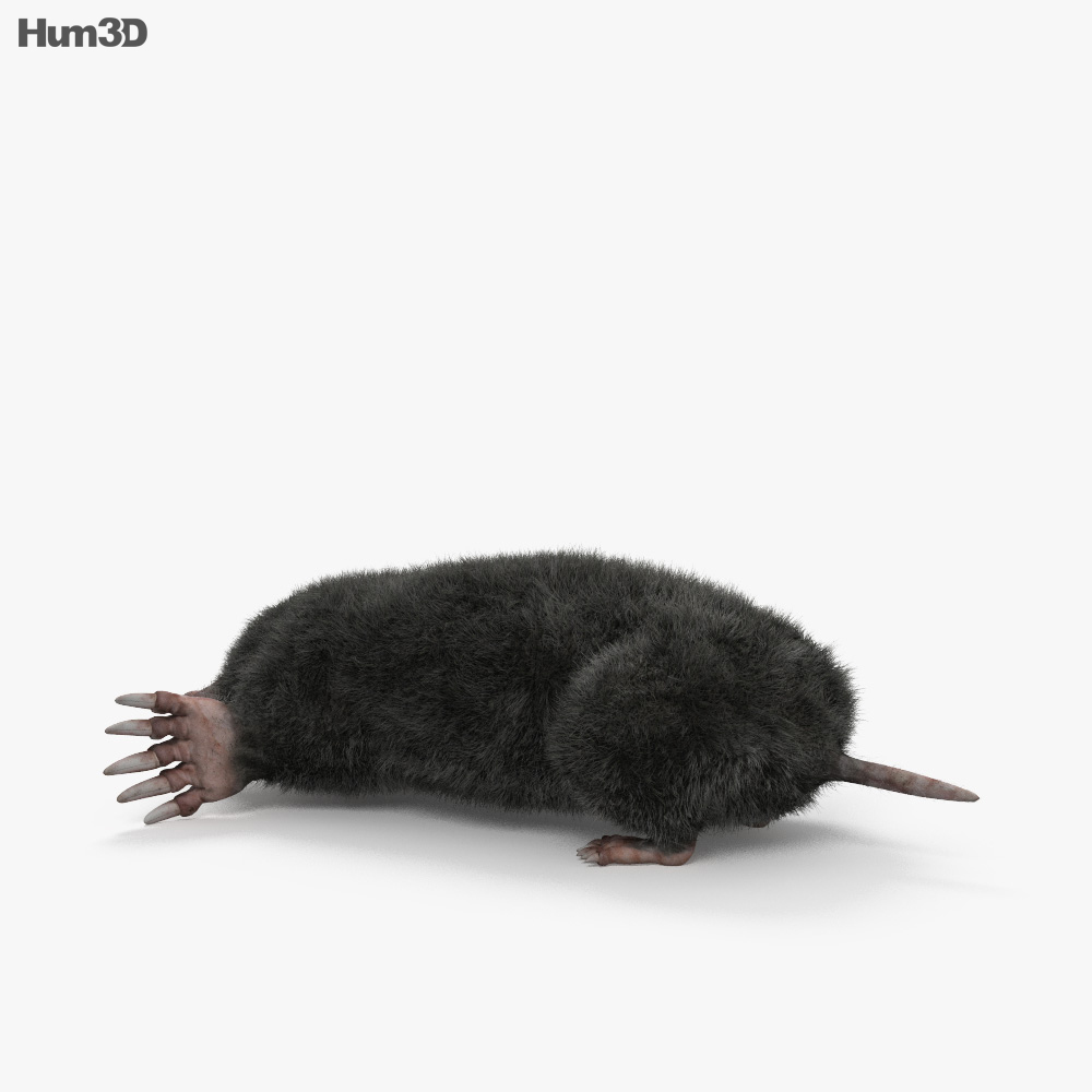 Eastern Mole HD 3d model