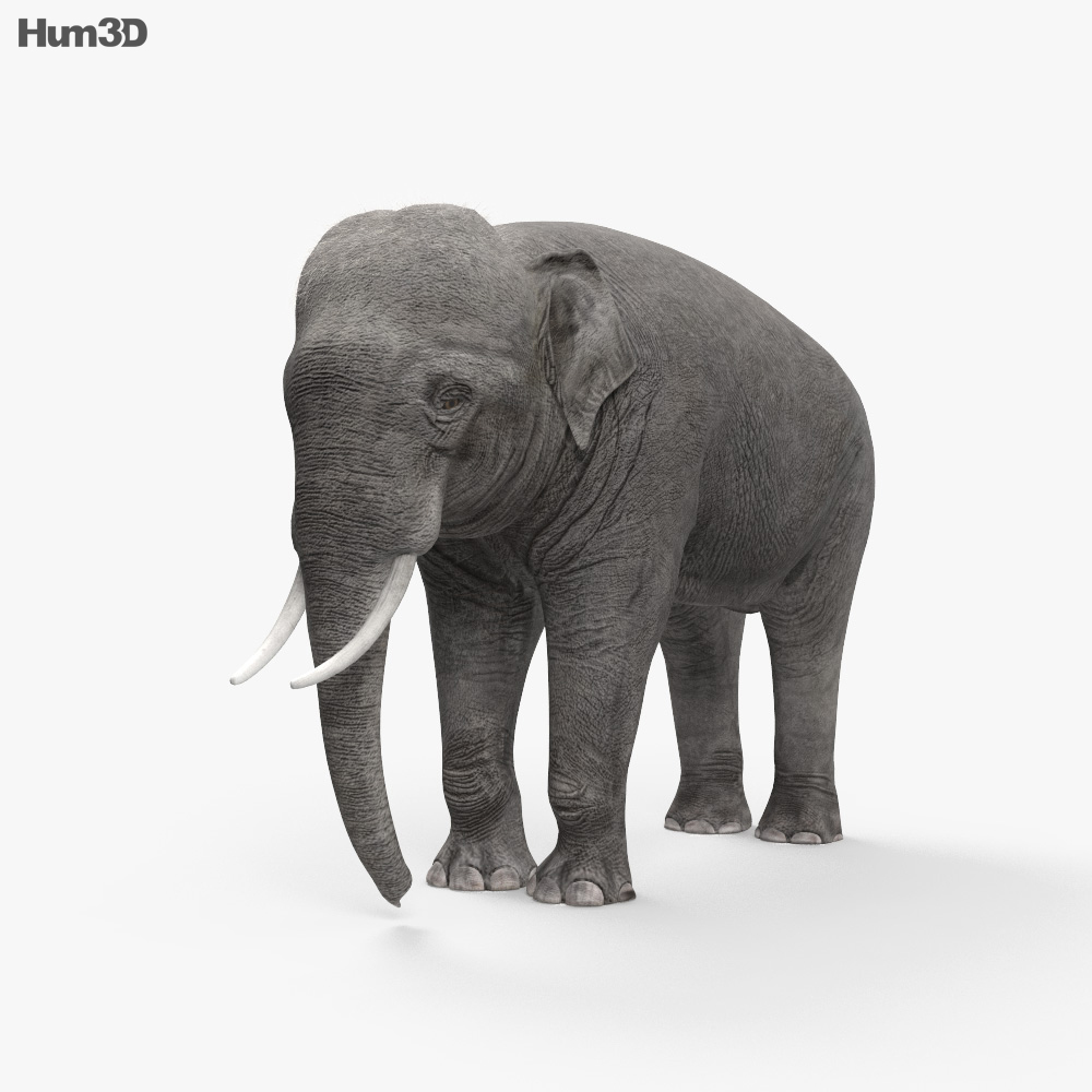 Asian Elephant HD 3d model