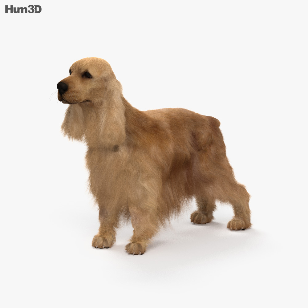 English Cocker Spaniel HD 3d model