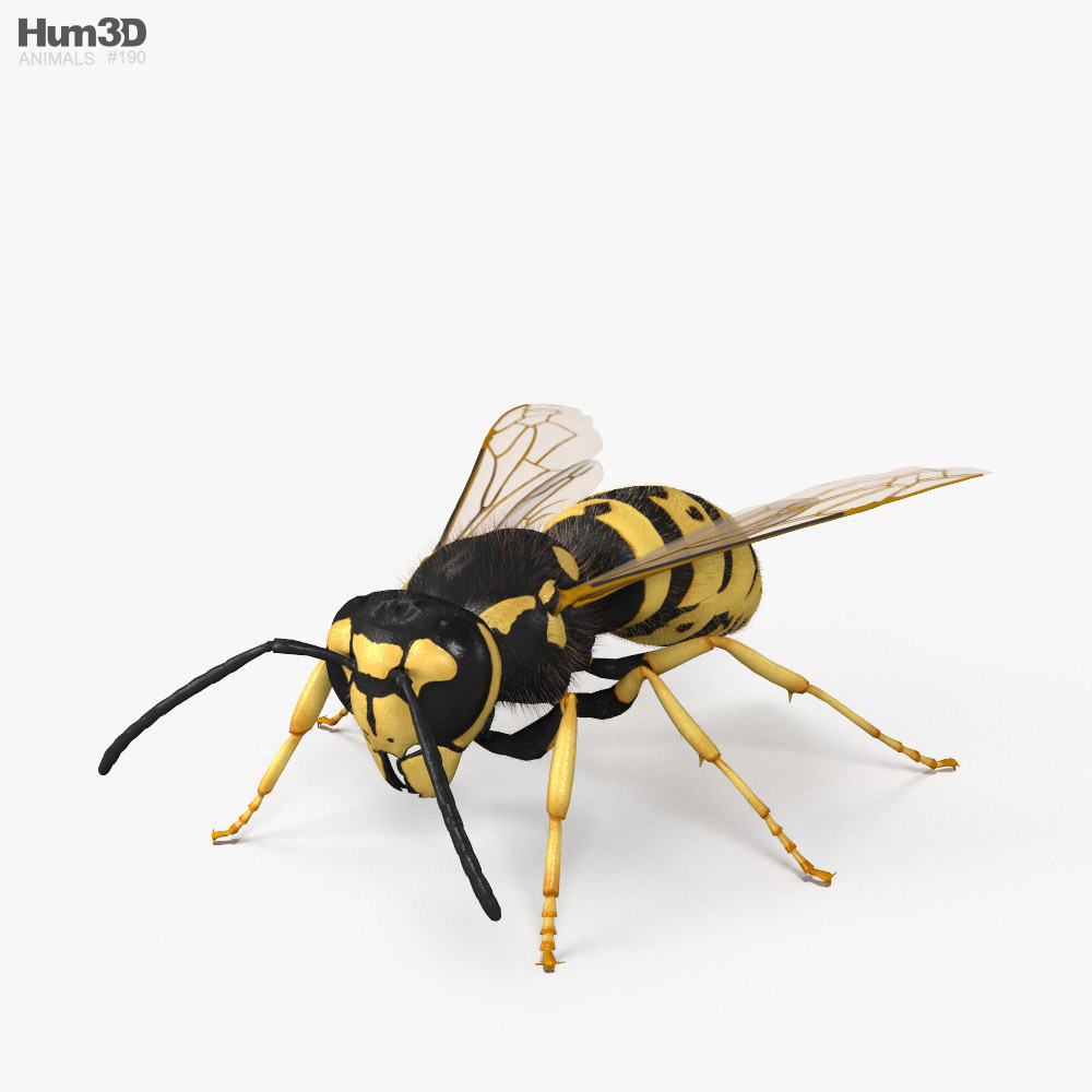 European Wasp HD 3d model