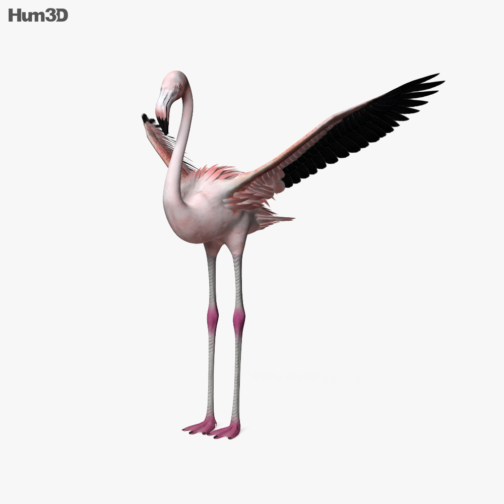Flamingo HD 3d model