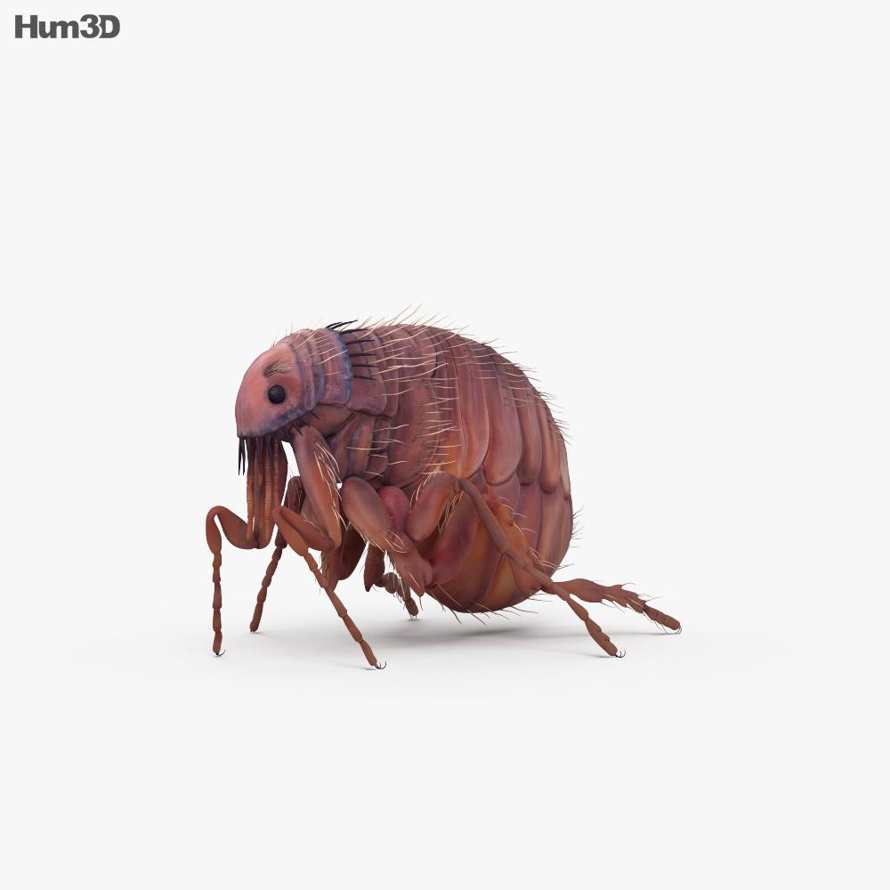 Flea HD 3d model