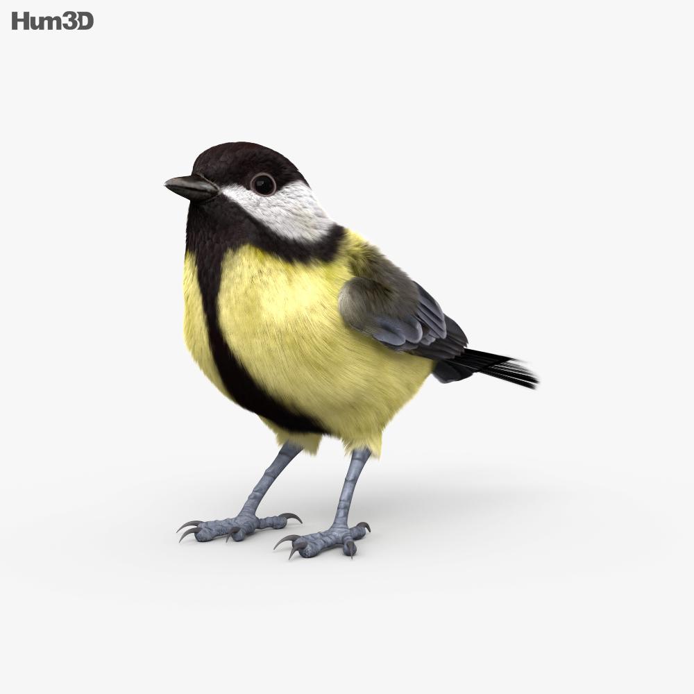 Great Tit HD 3d model