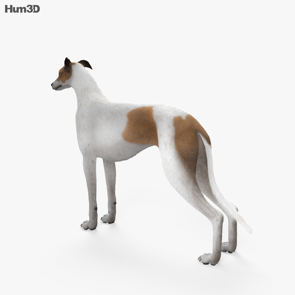 Greyhound HD 3d model