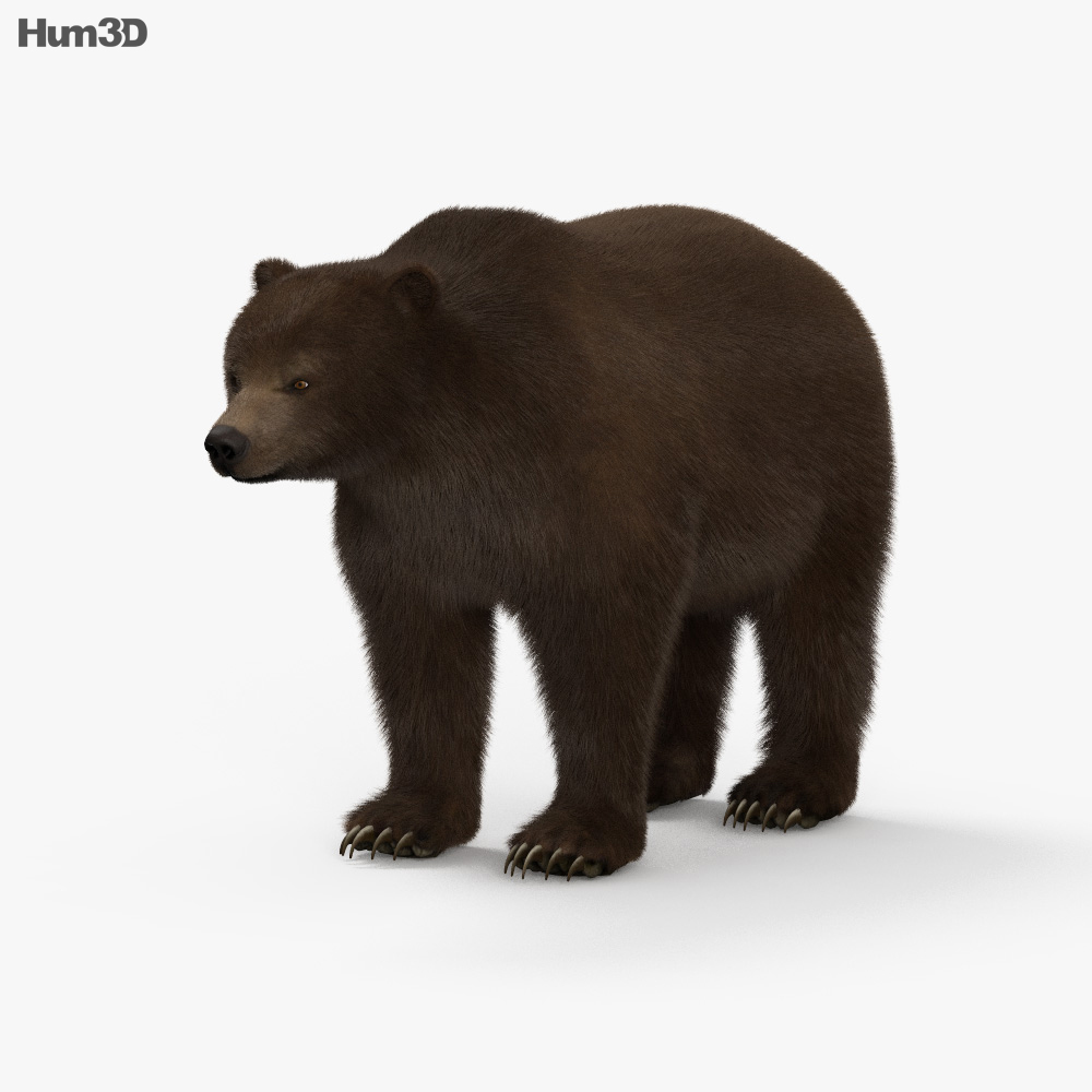 Grizzly Bear HD 3d model
