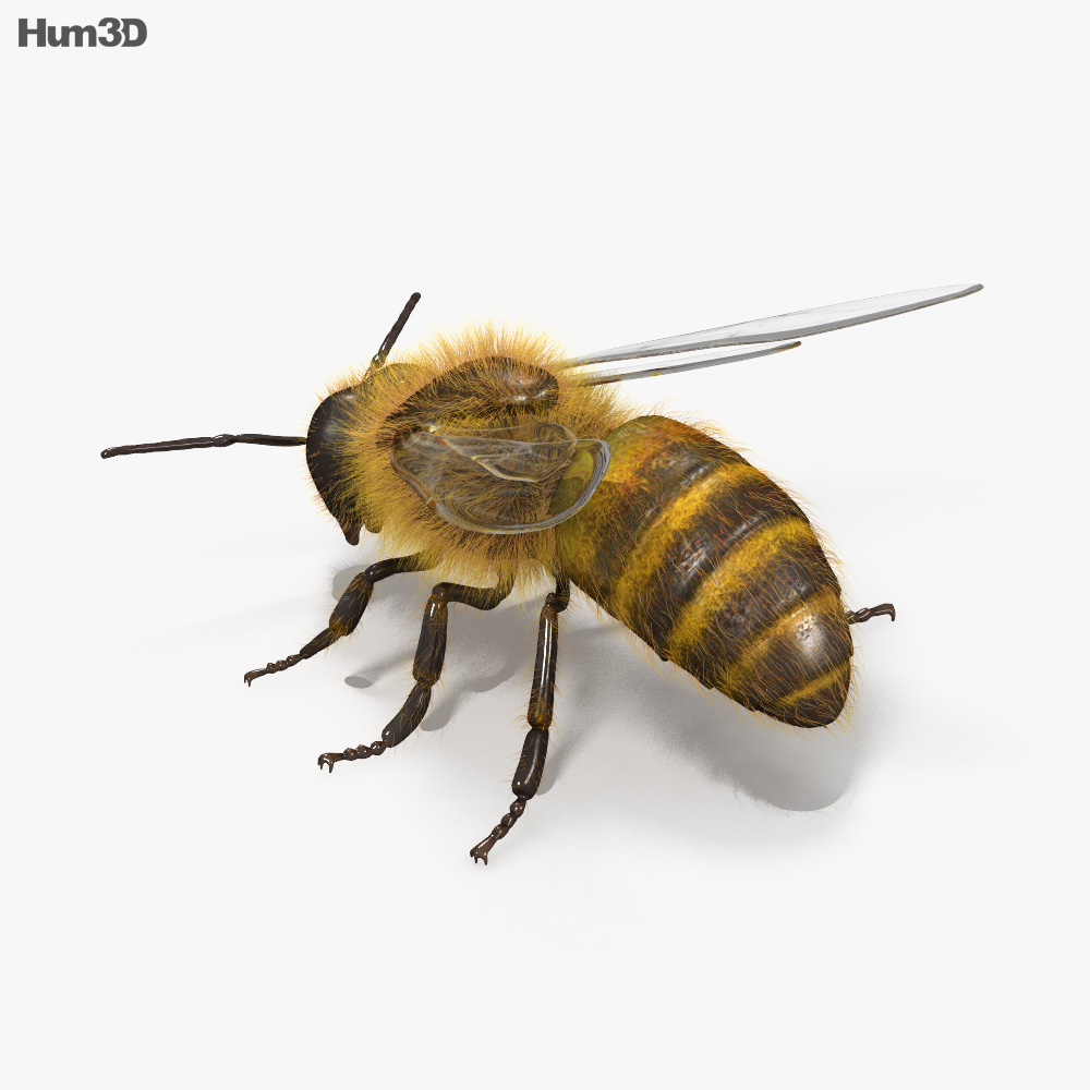 Honey Bee HD 3d model