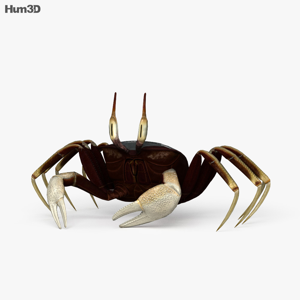 Horned Ghost Crab HD 3d model