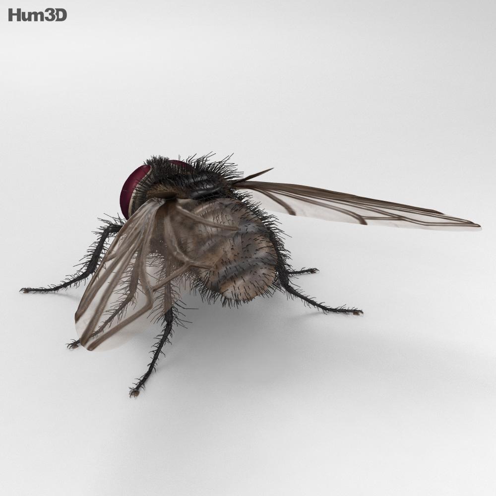 Housefly HD 3d model