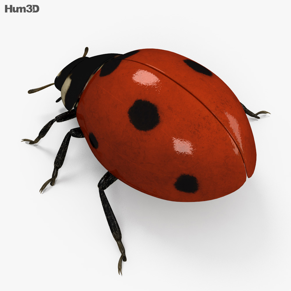 Ladybird HD 3d model