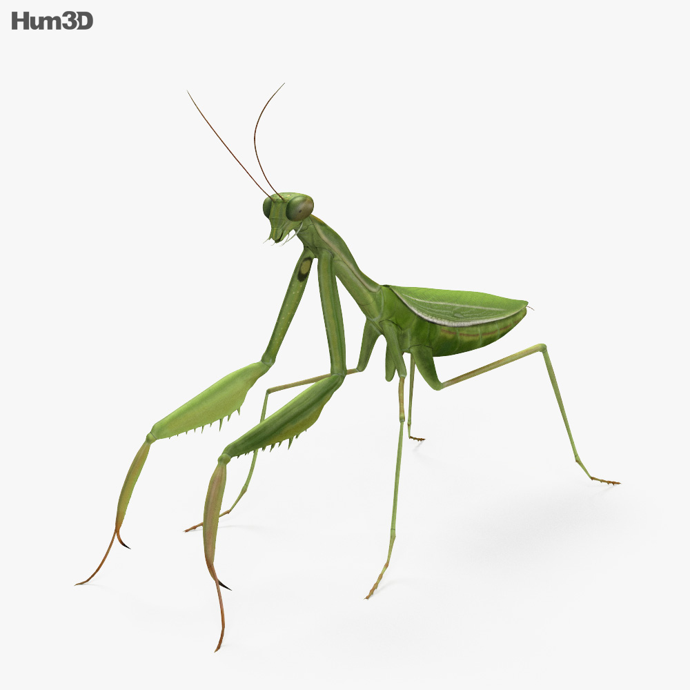 Mantis HD 3d model