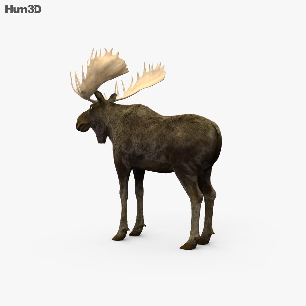 Moose HD 3d model