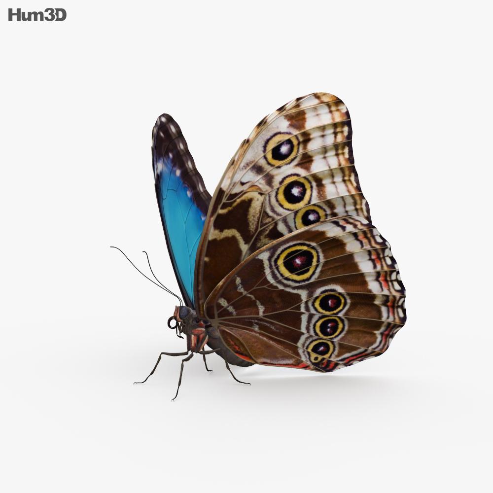 Morpho Butterfly HD 3d model