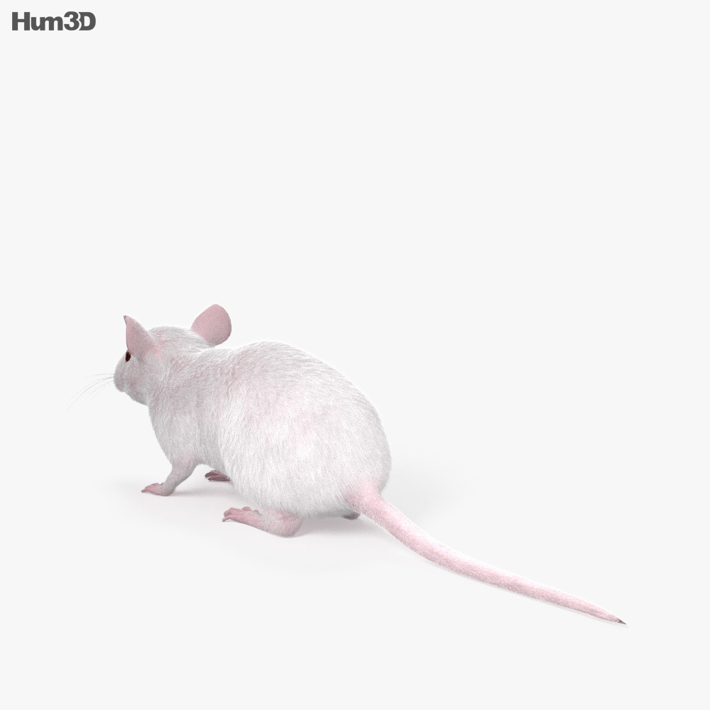 Mouse White HD 3d model
