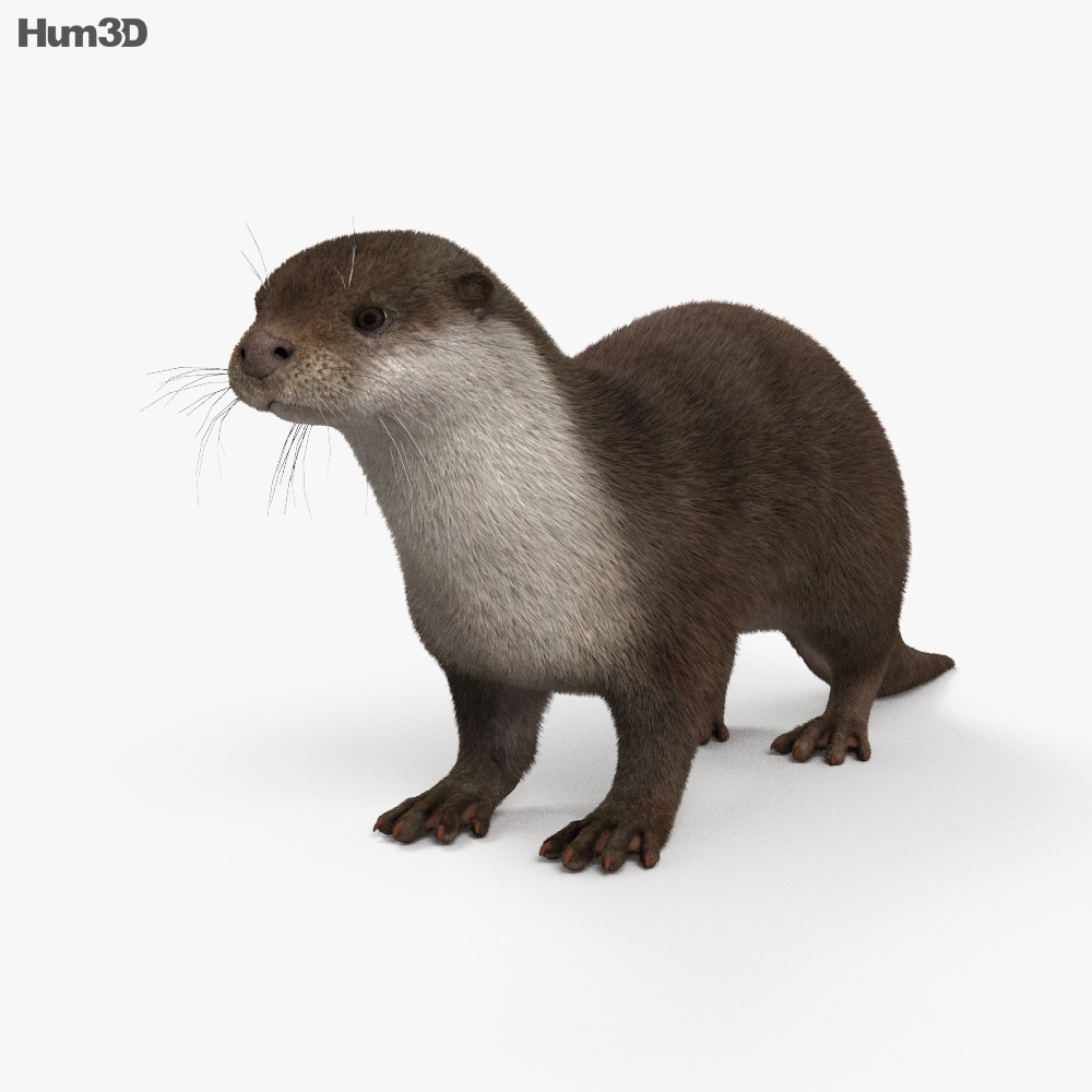 European Otter HD 3d model