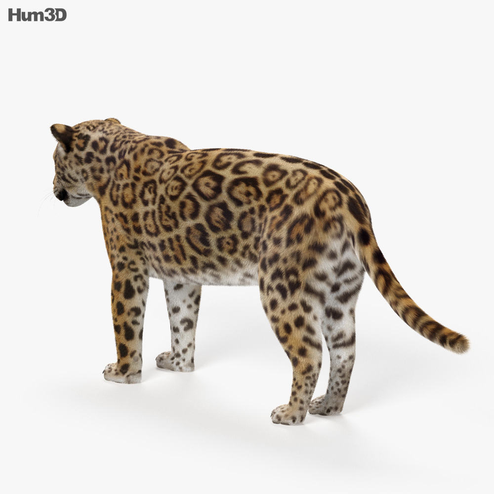 Jaguar HD 3d model