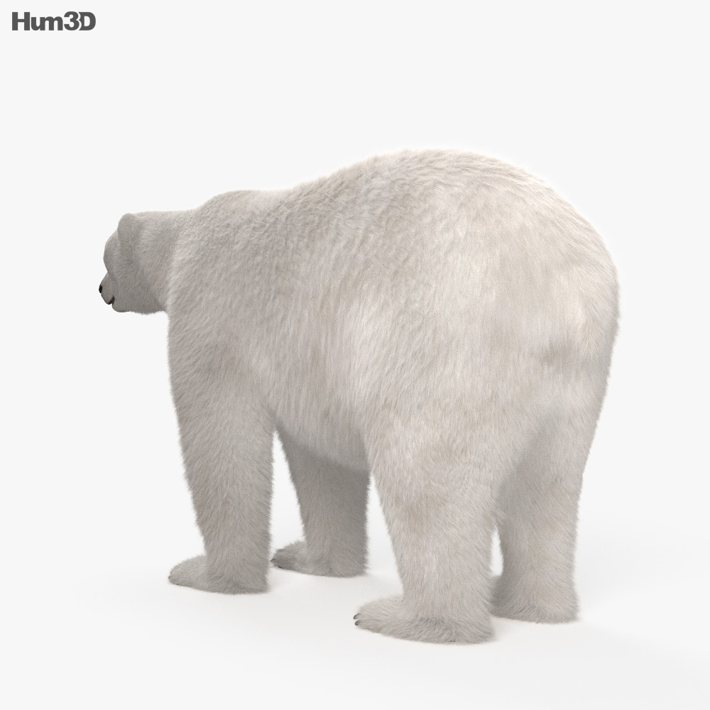 Polar Bear HD 3d model