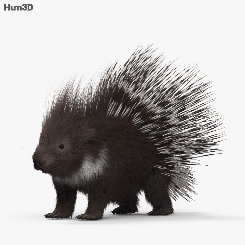 Porcupine HD 3d model