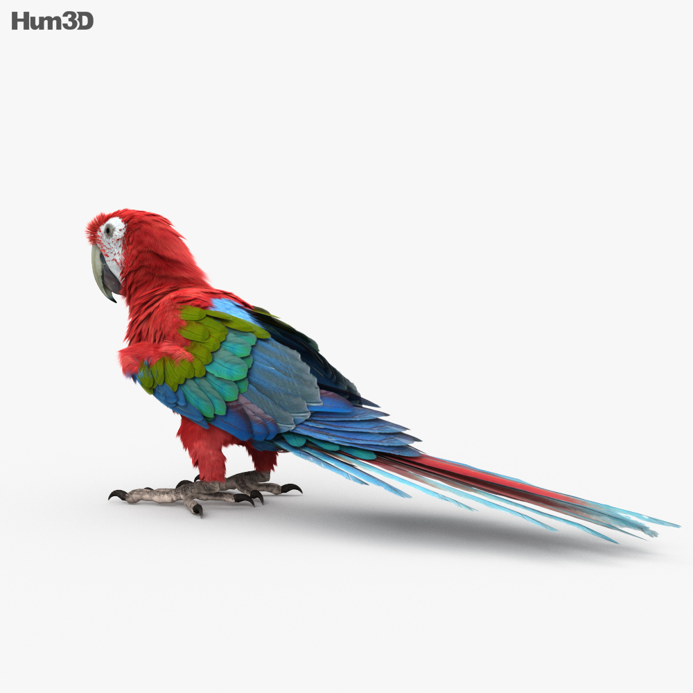 Red-and-Green Macaw HD 3d model