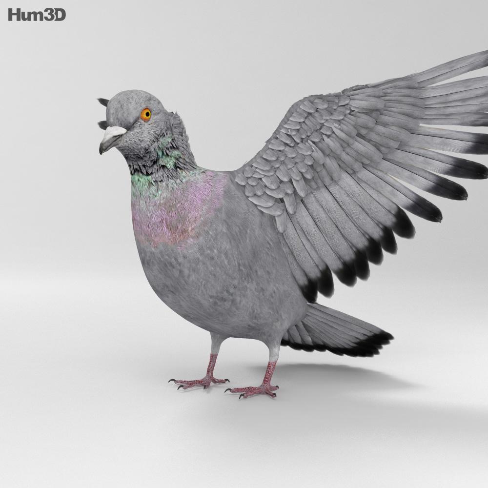 Rock Dove HD 3d model