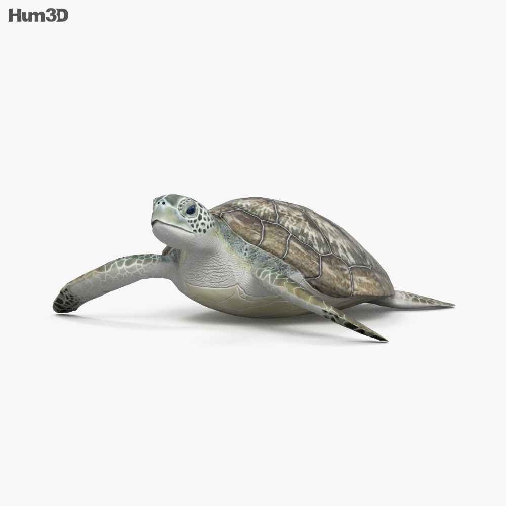 Hawksbill Sea Turtle HD 3d model