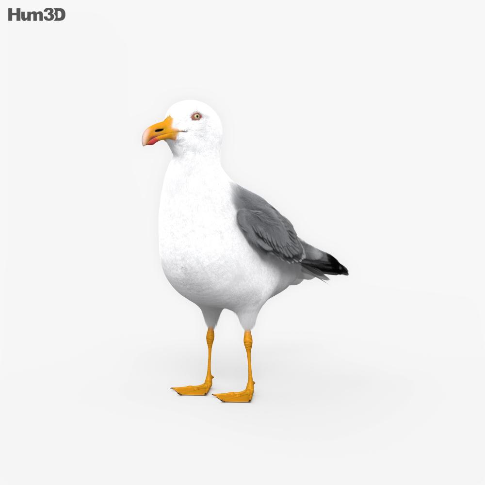 Common Gull HD 3d model