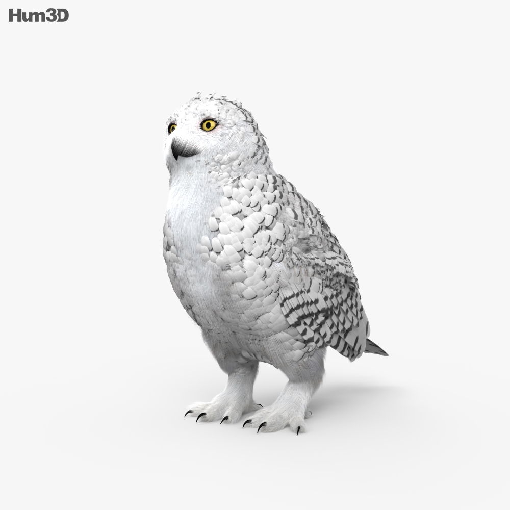 3D model of Snowy Owl HD