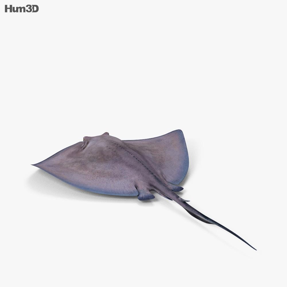 Stingray HD 3d model