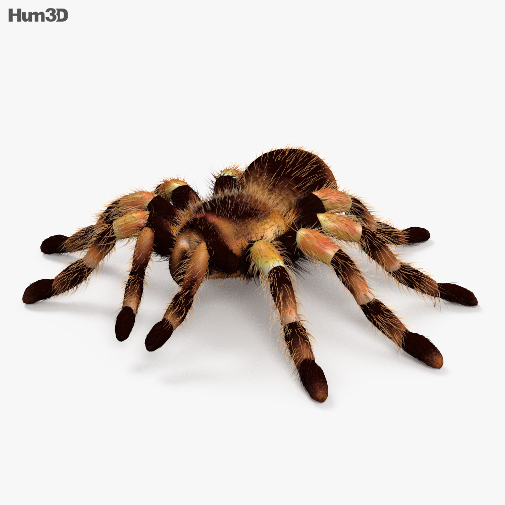 Tarantula HD 3d model