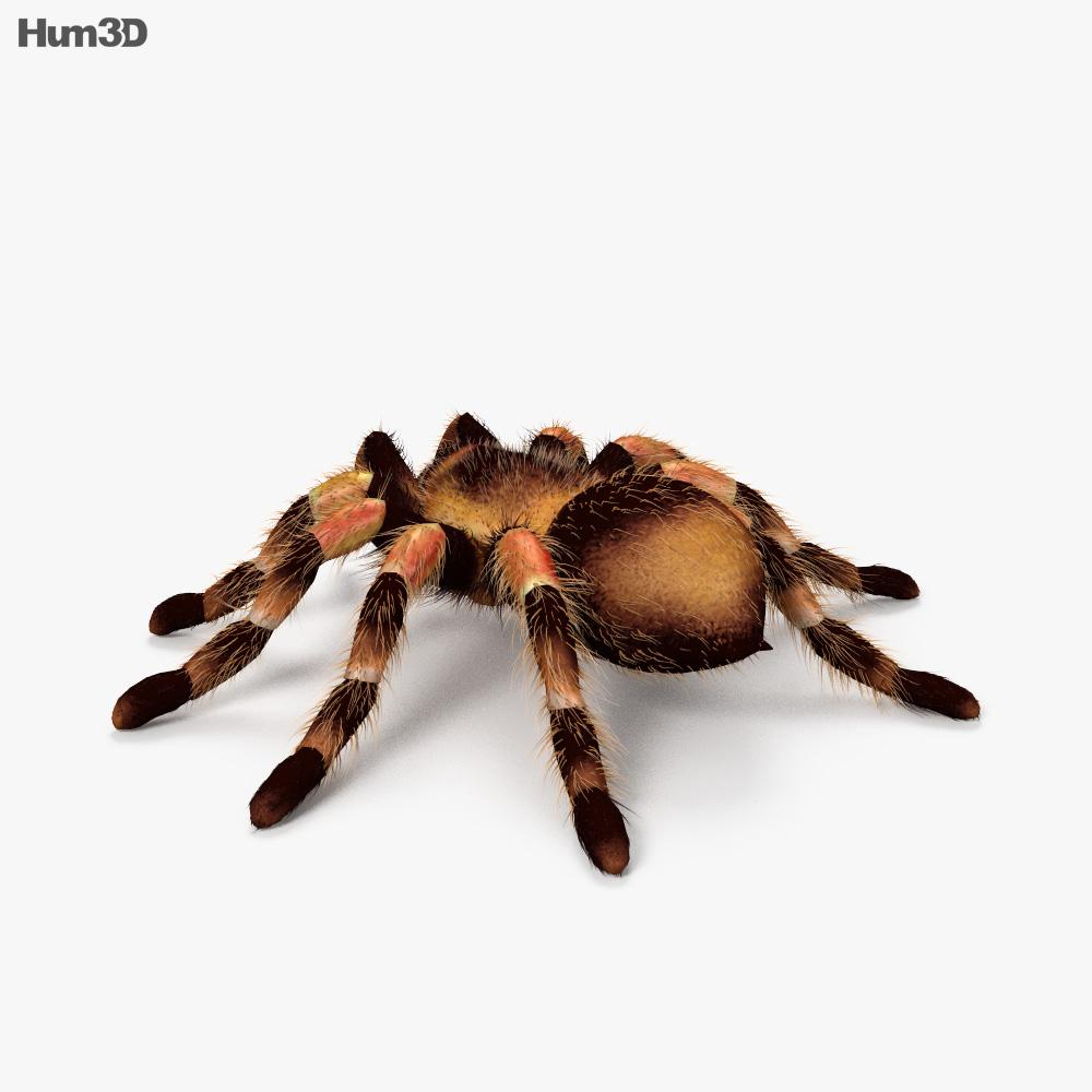 Tarantula HD 3d model