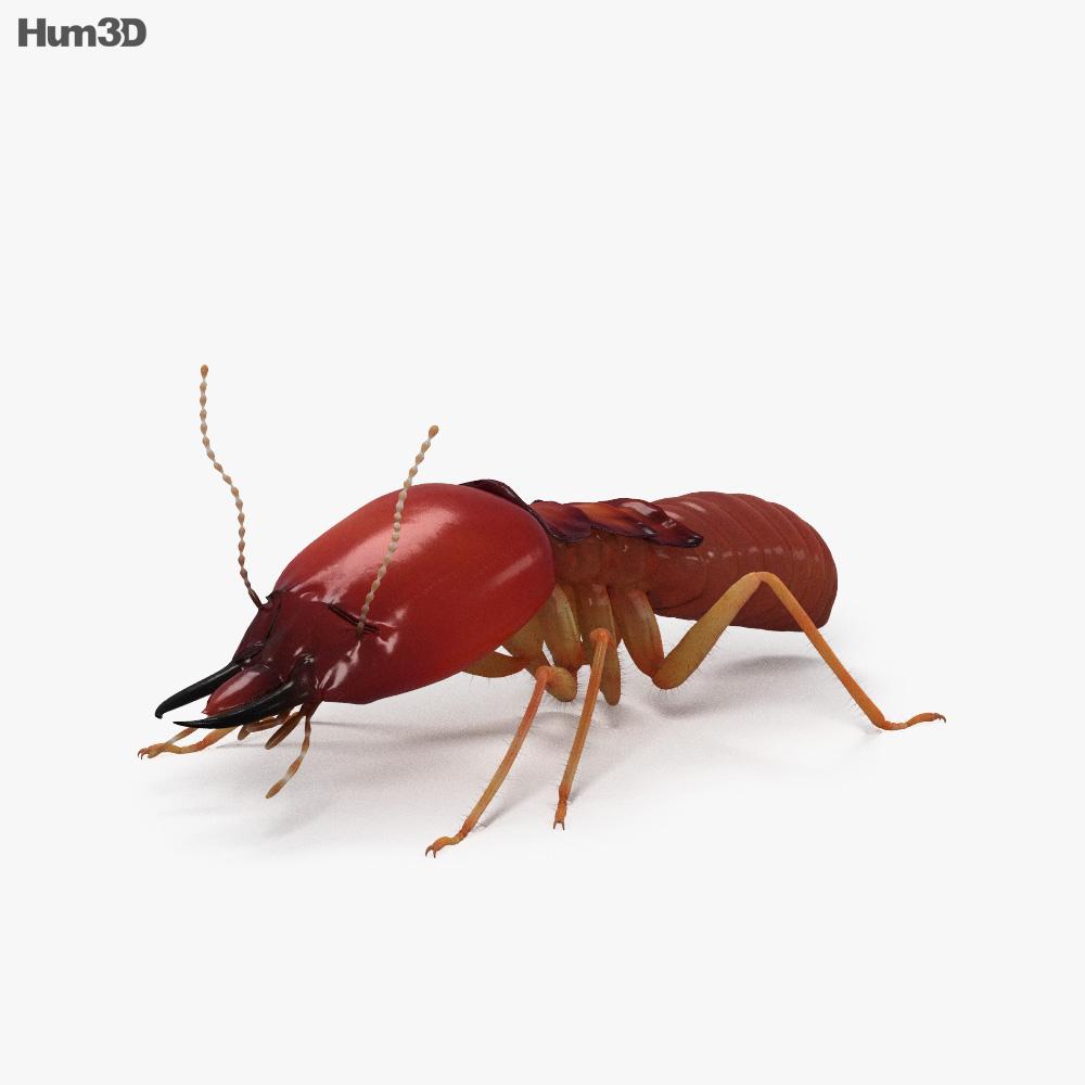 Termite HD 3d model