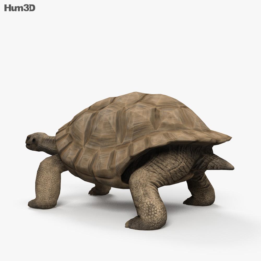 Galapagos Turtle HD 3d model
