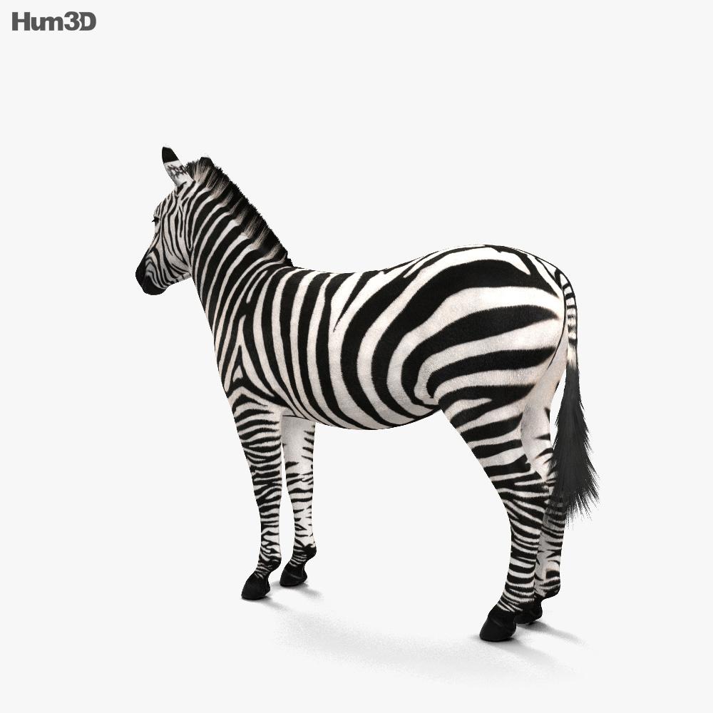Zebra HD 3d model