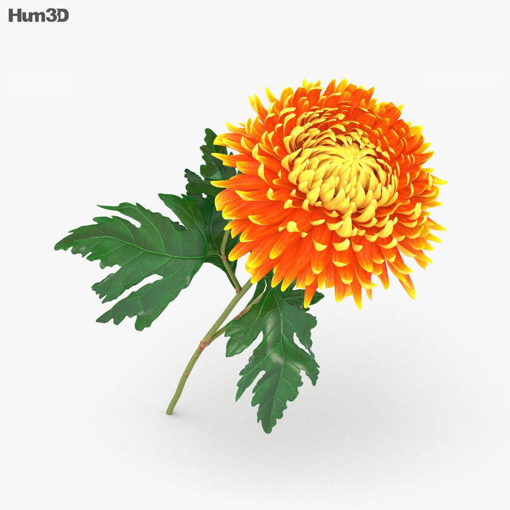 Chrysanthemum 3d model