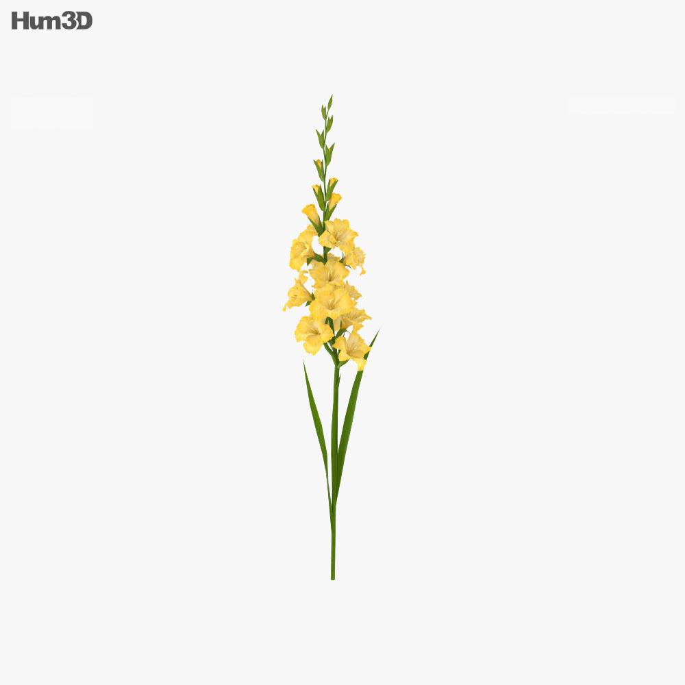 Gladiolus Yellow 3d model