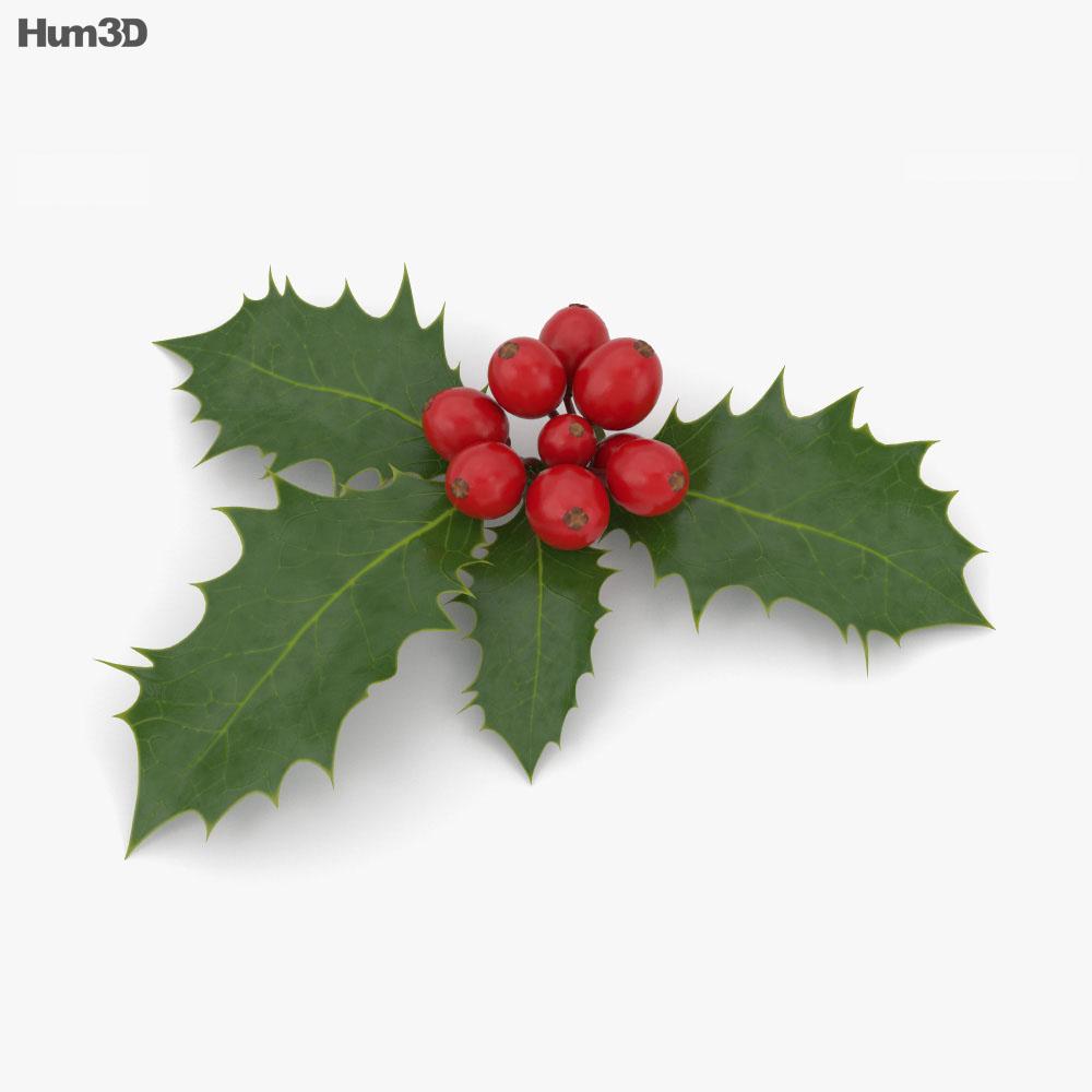 Holly 3d model