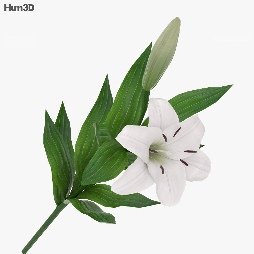 Lilium 3d model