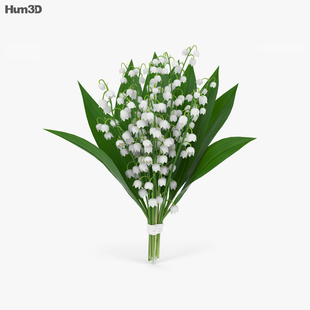 Lily of the valley 3d model