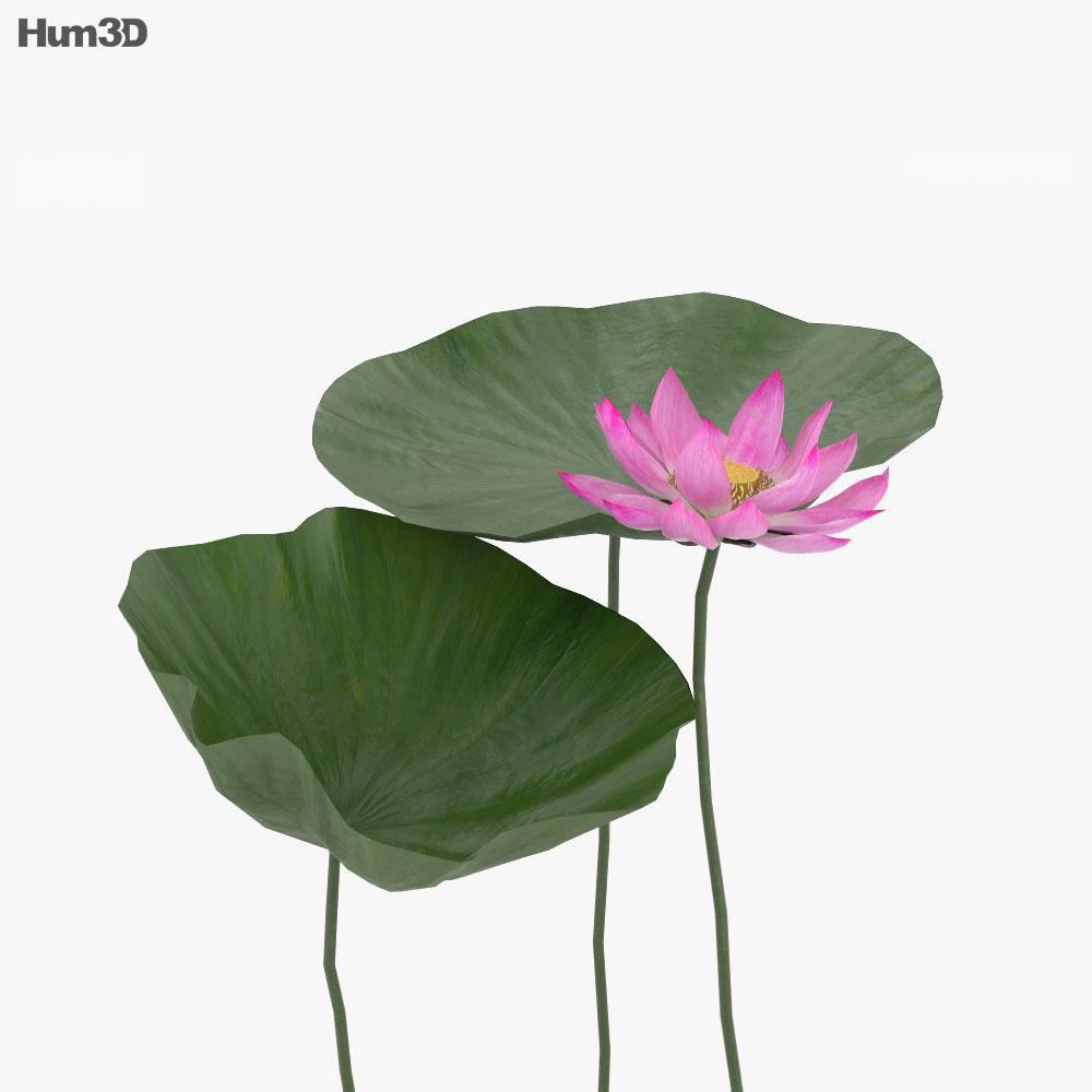 Lotus 3d model