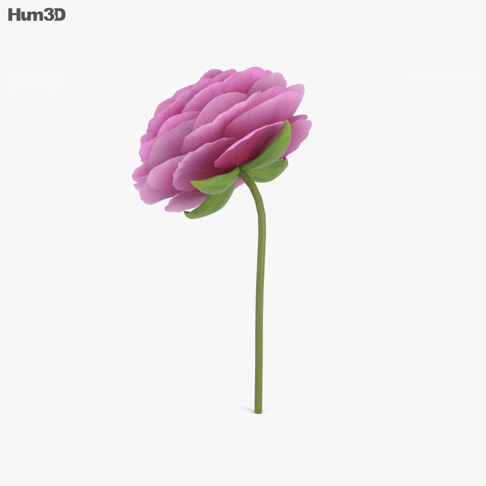 Ranunculus 3d model