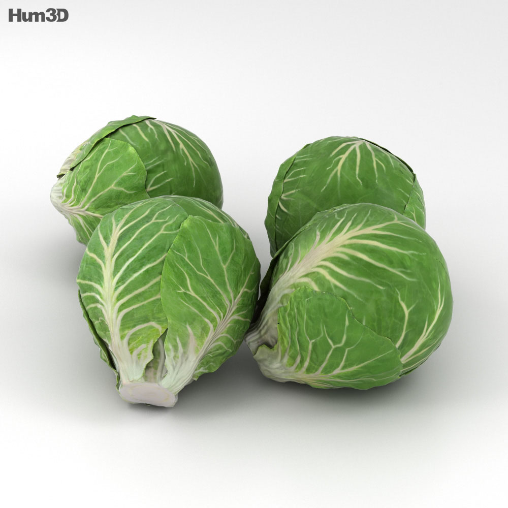 Brussels Sprout 3d model