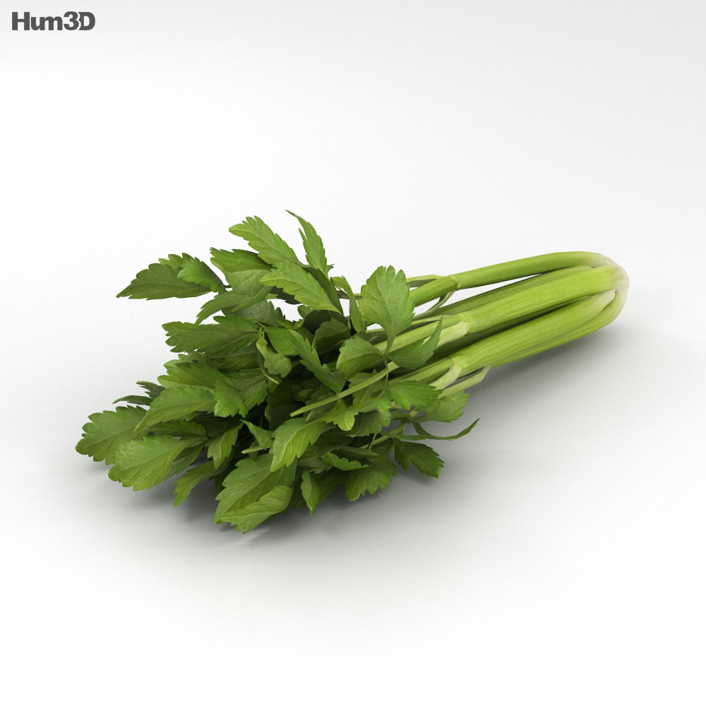 Celery 3d model