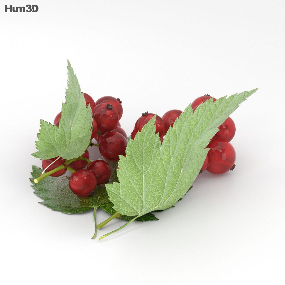 Redcurrant 3d model