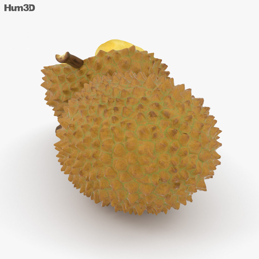 Durian 3d model